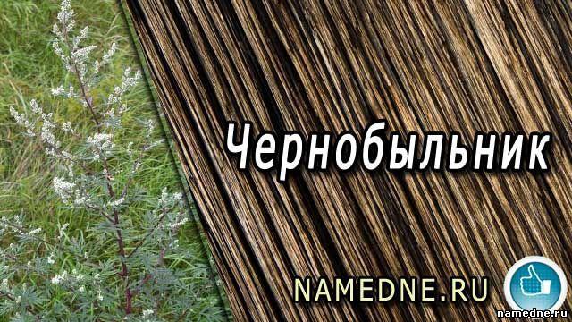 Чорнобиль - лікувальні властивості