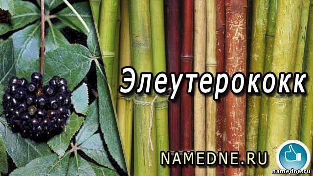 Елеутерокок - лікувальні властивості