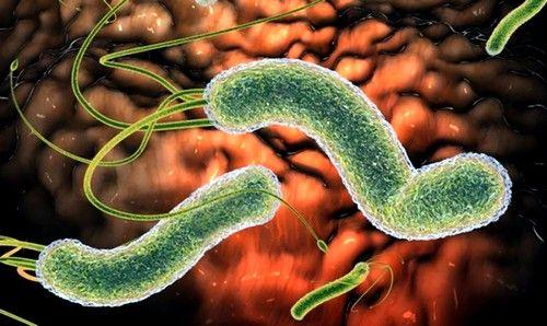 причина виникнення - віруси або бактерії