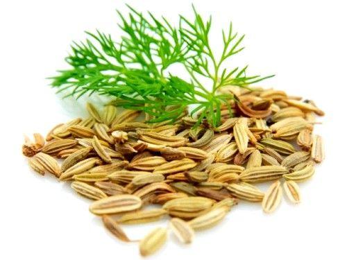 Хорошим ефектом володіє відвар на основі насіння кропу