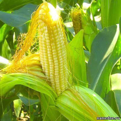 Цілющі властивості трав і Лікування народними засобами