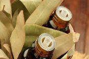 Масло евкаліпта: застосування, властивості