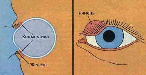 густа мазь, потрапляючи в око, не дає чітко бачити протягом 30-40 хвилин