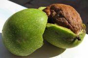 Настоянка зеленого волоського горіха: застосування
