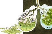 Очищення легенів народними засобами