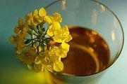 Рапсове масло: застосування, користь і шкода