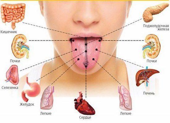 Щитовидна залоза відповідає за роботу цілого організму