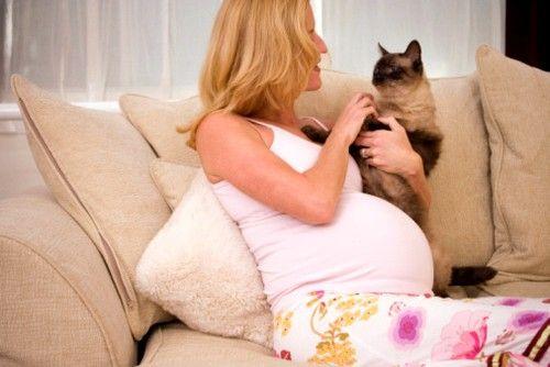 Токсоплазмоз при вагітності