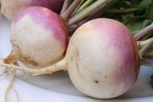 Турнепс (насіння турнепсу) - опис, цілющі властивості, застосування