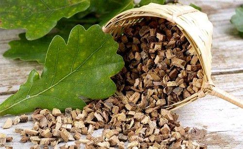 Відвар з дубової кори ефективний при запаленні ясен